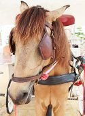 foto of workhorses  - close up face of working horse with eyes blind path - JPG