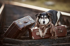 pic of dog tracks  - Dog on rails with suitcases - JPG