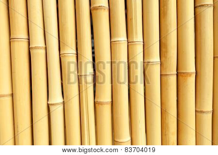 Real Bamboo Background Texture