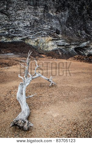 dry tree trunk lying in desert, vertical format