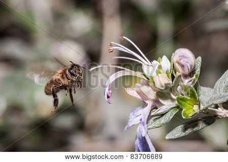bee on a flower arriving to pollinate