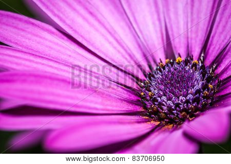 Purple flower detail of petals and pistils, extreme macro, background out of focus, isolated