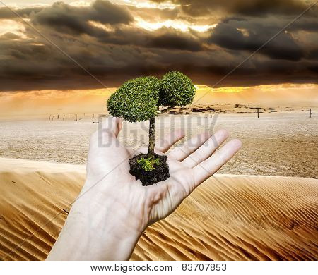 Hand Holding A Sapling Tree Amid Drought In The Desert