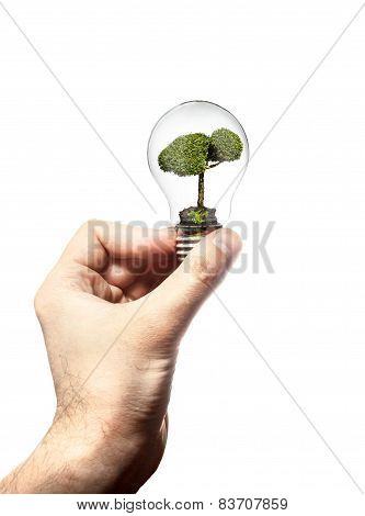 Hand Holds The Incandescent Lamp With Tree Inside