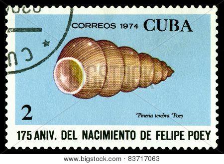 Vintage  Postage Stamp. Pineria Terebra.