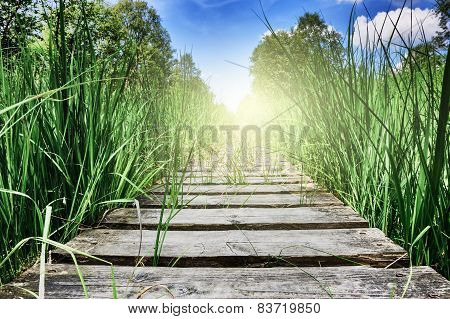 Wooden Plank Walkway Surrounded By Green Grass