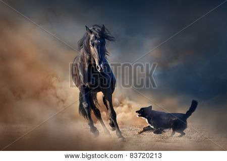 Black stallion horse play with dog