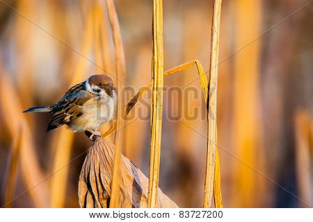 A bird sitting among of yellow reed marshes