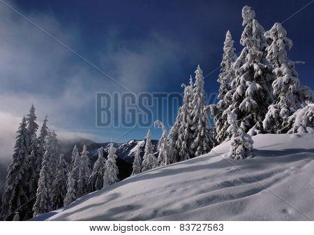 Alpine winter Steven's Pass