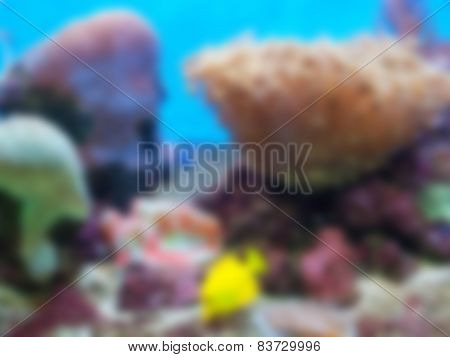 Natural Bright Blurred Background Of Yellow Fish.