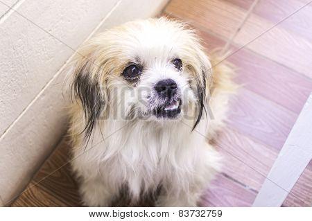 Portrait Od Puddle Dog