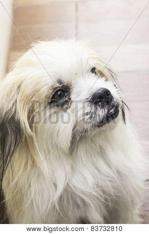 Puddle Dog