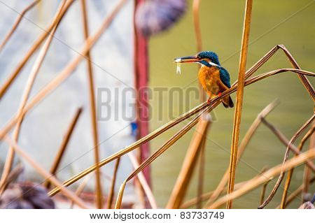A bird sitting among of yellow reed marshes with little fish in month