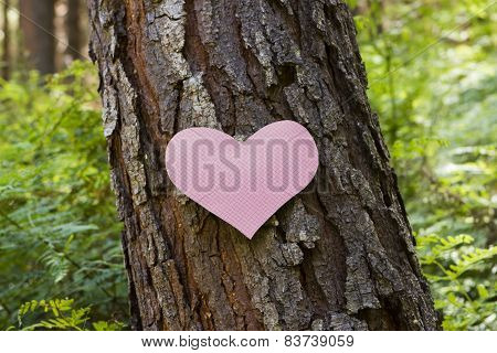 Heart Stuck To A Pine Tree