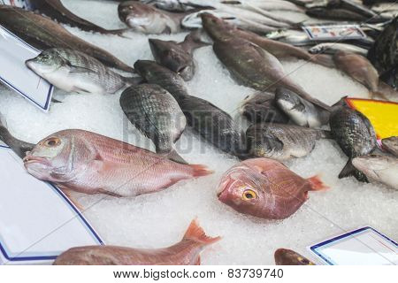 Fish On Ice In The Market