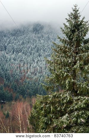 Beautiful Landscape View Of Winter Forest