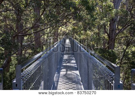 Tree Top Walk bridge in the Valley of the Giants
