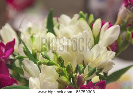 Bouquet Of White Freesias For The Best Wishes
