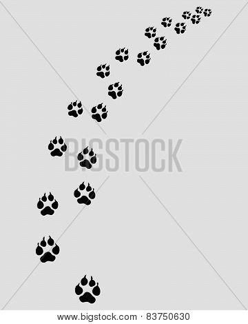 Footprints of dog