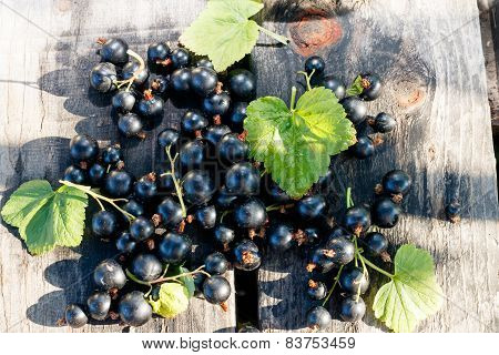 blackcurrant berries and leaves on wooden desk