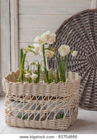 White Daffodils In A Basket