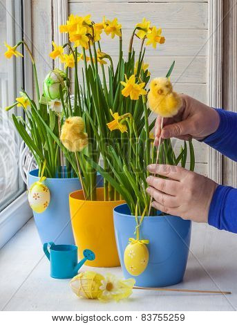 Female Hands Decorated By Easter Pot Of Narcissus