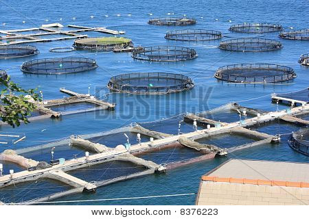 Fish Farm In La Spezia Italy