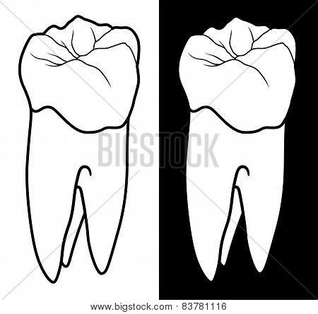 Tooth With Root Graphic Style