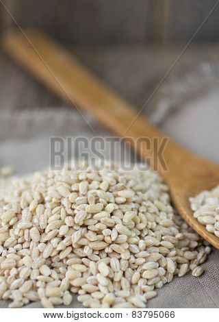 pearl barley closeup