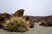 image of naturel  - View in the National Park del Teide - JPG