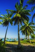������, ������: meadows and coconut trees