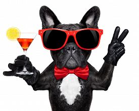 stock photo of boxers  - french bulldog dog holding martini cocktail glass ready to have fun and party isolated on white background - JPG
