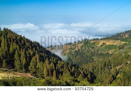 Inland Gran Canaria, View Over The Tree Tops Towards Clud Cover On The North Of The Isalnd