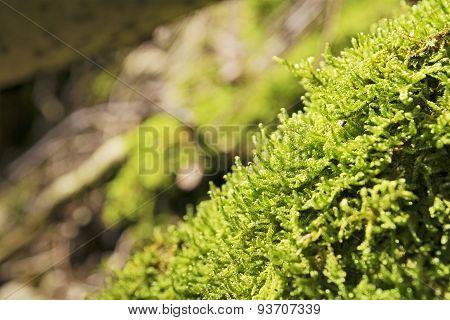 Moss Breitenstein Bavaria Alps