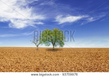 Trees in wheat field over cloudy blue sky