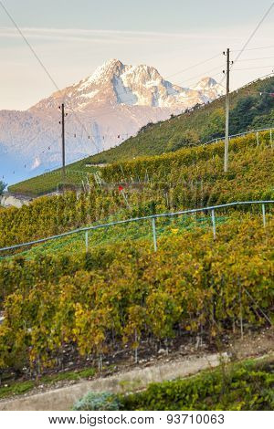 vineyards near Sion, canton Valais, Switzerland