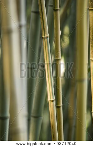 Green And Brown Bamboo Detail