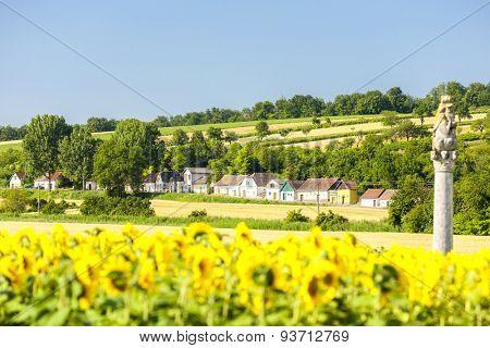 wine cellars with sunflower field, Immendorf, Lower Austria, Austria