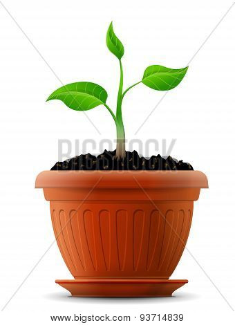 Sprout With Leaves In Flower Pot
