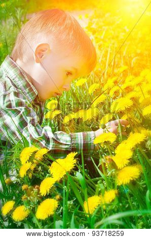 Portrait of a beautiful child in a meadow picking dandelions
