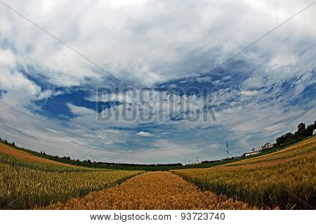 Different Varieties Of Wheat In Fish-eye View 4