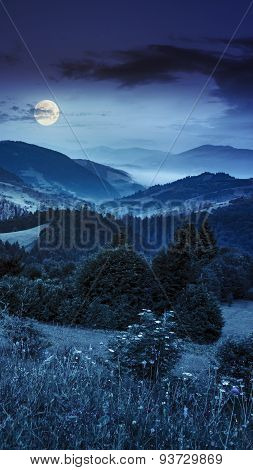 Forest In Fog Around The Mountain Top At Night