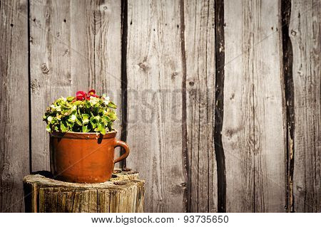 Flowers in clay pot