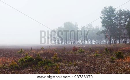 Landscape With Field And Forest In Fog