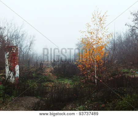 Autumn Landscape With Birch And Ruins