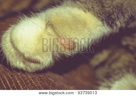 Macro Of Cat Paw