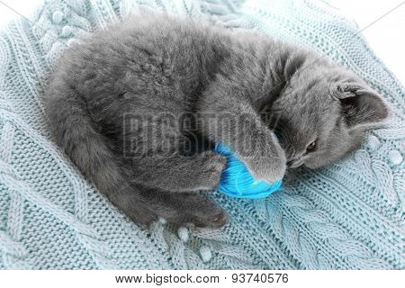 Cute gray kitten with skein of thread on warm plaid, closeup