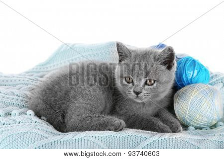 Cute gray kitten with skeins of thread on warm plaid isolated on white