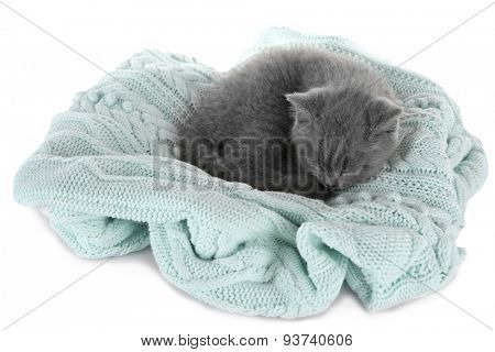 Cute gray kitten on plaid isolated on white