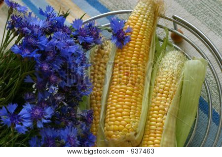 Cornflowers And Corn